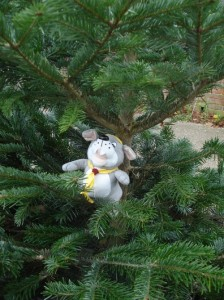 12,3 ..................There are so many needles on this tree, but it smells wonderful.