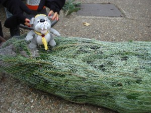 Checking tree is packed and ready to go.